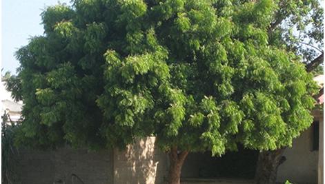 save-tree-2